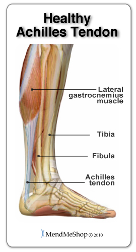 A healthy Achilles tendon is flexible